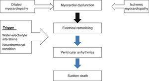 Myocardial dysfunction as an arrhythmogenic substrate in sudden death.