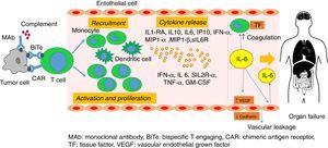 Pathophysiology of cytokine release syndrome.
