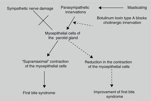 Possible mechanism of action of botulinum toxin type A in first bite syndrome.8