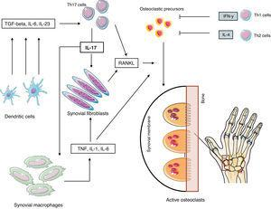 Pathogenesis of rheumatoid erosions. Abbreviations: see Term glossary in Annex 1.