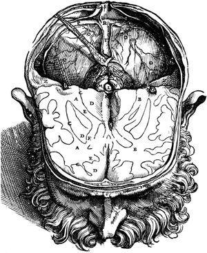 Illustration of the brain corresponding to the second edition of Fábrica by Vesalius (1555), which shows the location of the pineal gland (L), exactly in the centre of the cranial cavity.