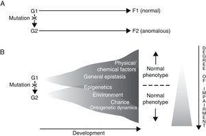 Two alternative ways of envisioning genotype–phenotype (G–P) relationships with regard to language disorders. Adapted from Sholtis and Weiss.72
