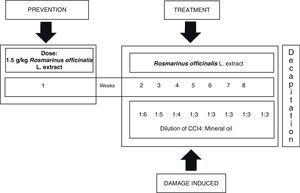 Flow chart showing the model for CCI4-induced hepatic damage and treatment with Rosmarinus officinalis L. extract.