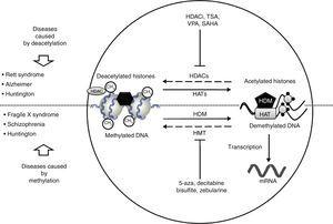 Neurological disorders and epigenetic alterations. Under normal conditions, HAT enzymes acetylate histone tails to permit correct DNA transcription. HDAC enzymes, in contrast, deacetylate histones, and this process can give rise to Rett syndrome, Alzheimer disease, and Huntington disease. Substances including HDACi, TSA, VPA, and SAHA inhibit HDAC enzymes and are used to treat these entities. On the other hand, HDM enzymes demethylate DNA under normal conditions, which permits correct transcription. HMT enzymes methylate DNA, which results in fragile X syndrome, schizophrenia, and Huntington disease. Substances including 5-aza, decitabine, bisulfite, and zebularine inhibit HMT enzymes and are used to treat these entities. HAT, histone acetyltransferases; HDAC, histone deacetylases; HDACi, histone deacetylase inhibitor; HDM, histone demethylases; HMT, histone methyltransferases; SAHA, suberoylanilide hydroxamic acid; TSA, tricostatin A; VPA, valproic acid; 5-aza: 5-aza-2′-deoxycytidine.