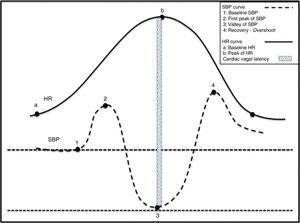 Physiological changes in the haemodynamic variables during active standing. (1) Act of sitting generating simultaneous increases in SBP and HR. (2) Abrupt drop in SBP and rise in HR. Tachycardia is a reflex resulting from the drop in SBP. (3) Gradual increase in SBP and normalisation of HR. (4) Overshoot of SBP.