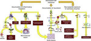 Pathophysiological consequences of decreased CSF clearance: accumulation of neurotoxins and inflammatory mediators, and exposure of the neuropeptides responsible for neuroendocrine signalling to the activity of hydrolytic enzymes. Aβ-42: 42-residue fragment of amyloid-β peptide; ACT: antichymotrypsin; APP: amyloid precursor protein; LRG: leucine-rich glycoprotein; NPY: neuropeptide Y; TGF: transforming growth factor; TNF: tumour necrosis factor; VIP: vasoactive intestinal peptide.