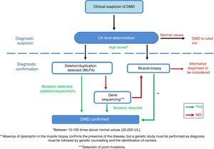 Adaptation of the diagnostic algorithm for DMD, from suspicion to confirmation. Source: Camacho.26