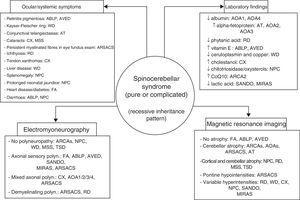 The 4 pillars for diagnosing autosomal recessive cerebellar syndromes of probable degenerative nature. ABLP: abetalipoproteinaemia; AOA1: ataxia with oculomotor apraxia type 1; ARCA: autosomal recessive cerebellar ataxia; ARSACS: autosomal recessive spastic ataxia of Charlevoix-Saguenay; AT: ataxia-telangiectasia; AVED: ataxia with vitamin E deficiency; CX: cerebrotendinous xanthomatosis; FA: Friedreich ataxia; MIRAS: mitochondrial recessive ataxia syndrome; MSS: Marinesco-Sjögren syndrome; NPC: Niemann-Pick disease type C; RD: Refsum disease; SANDO: sensory ataxic neuropathy, dysarthria, and ophthalmoparesis; TSD: Tay-Sachs disease; WD: Wilson disease.