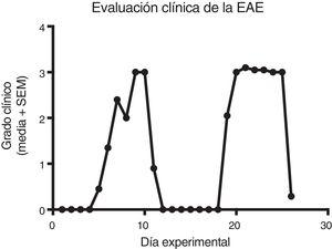Development of the relapsing-remitting EAE model induced with experimental homogenate in adult Sprague-Dawley rats. Grade 3 was the highest degree of severity observed. EAE: experimental autoimmune encephalitis; SEM: standard error of the mean.