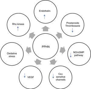 Neurohumoral mediators in persistent pulmonary hypertension of the newborn. Factors contributing to the physiologic alterations of PPHN include: (i) decreased production of vasodilator substances including NO and prostanoids; (ii) increase in endothelin production from the pulmonary endothelium; and (iii) exposure to high concentrations of supplemental oxygen leading to increased oxidative stress, activation of signaling pathways such as Rho kinase and alterations in expression of calcium-sensitive potassium channels. cGMP: cyclic guanosine monophosphate; NO: nitric oxide; PPHN: persistent pulmonary hypertension of the newborn; VEGF: vascular endothelial growth factor.