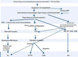 Diagnostic algorithm of cardiac amyloidosis. AAB: autoantibodies; ANA: antinuclear antibodies; BM: bone marrow; ECG: electrocardiogram; MRI: magnetic resonance imaging; PEP: protein electrophoresis; RF: rheumatoid factor; TM: tumor markers; TTE: transthoracic echocardiogram; TTR: transthyretin.