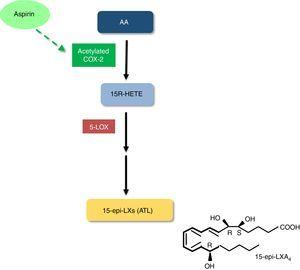 Biosynthesis of aspirin-triggered lipoxins. <span class=