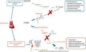 Mechanism of action of LCZ696 (from Vardeny et al.25).