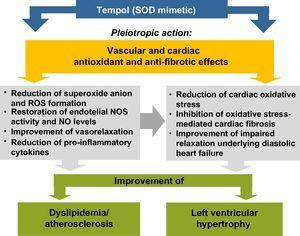 Proposed mechanisms to explain the improvement of dyslipidemia and left ventricular hypertrophy by Tempol, a superoxide dismutase mimetic, in agreement with Gonçalves et al.14 NO: nitric oxide&#59; NOS: nitric oxide synthase&#59; ROS: reactive oxygen species&#59; SOD: superoxide dismutase.