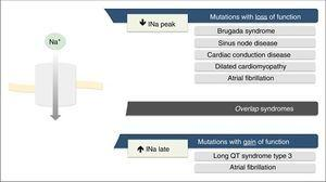 Clinical phenotypes associated with mutations in Nav1.5 sodium channels. Extracted and adapted from Liu et al. (2014).7