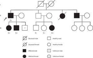 Family pedigree. G+: genotype positive; G-: genotype negative. Arrow: proband.