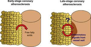 Study hypothesis. Accumulation of epicardial adipose tissue (EAT) is associated with non-calcified, vulnerable coronary artery disease (CAD) and increased risk of coronary events in asymptomatic subjects and low-risk patients. Recent studies have shown that the presence of CAD affects the properties of the adjacent EAT, and that the molecular players involved in the interplay between EAT and the coronary arteries may undergo dynamic changes over the history of the disease. We designed the EPICHEART study (NCT03280433) to investigate how EAT volume and proteome are linked to the presence of coronary stenosis and coronary calcification in an elderly cohort of severe aortic stenosis patients who underwent elective aortic valve replacement.