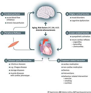 A systematic overview of bidirectional heart and brain interaction in heart failure.Adapted from Doehner W et al. EJHF 20182.