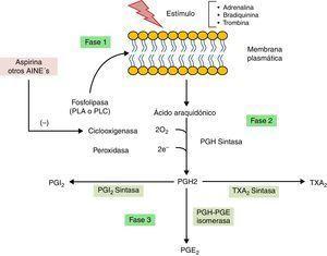 Proceso biosintético de prostanoides a partir de icosanoides.