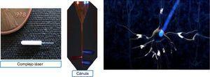 Transmisión de luz a una célula diana. Fuente: Bernstein et al.14.