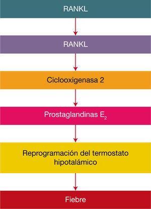 Participación del sistema RANKL – RANK- COX-2 en la reacción febril