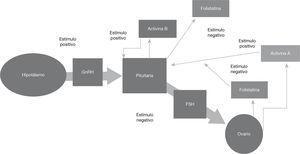 Acciones autocrinas y paracrinas de las activinas y folistatina en el eje pituitarioovario.