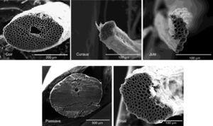 Micrographs of jute, coir, curaua, piassava and sisal fibers obtained by SEM analysis.