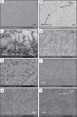 Microstructures of remaining metal (a) 700°C, (b) 800°C – showing solid solution in light gray area and 5, 3 silicides in dark gray regions, (c) 900°C – showing solid solution, 5, 3 silicides and NbCr2, medium gray regions, (d) 1000°C – showing eutectic like microstructure, (e) 1100°C, (f) 1200°C, (g) 1300°C, (h) 1400°C – showing a eutectic microstructure of Re2Si layer.