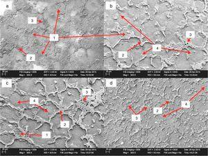 SEM images of microstructure of the AZ 81 alloys: (a) alloy without grain refiner, (b) alloy refined with synthetic graphite, (c) alloy refined with activated charcoal of 0.04%, and (d) alloy refined with activated charcoal of 0.98%. (1) Cellular structure, (2) discontinuous Mg17Al12 precipitates, (3) micro porosities and (4) carbon particles.