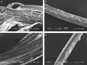 SEM images: (a–b) bundle of bagasse fibers and individual fiber after steam explosion at 195°C; (c–d) bundle of bagasse fibers and individual fiber after steam explosion at 205°C.