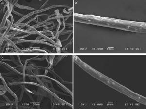 SEM images of cellulose fibers after pulping process: baggase fibers, steam explosion at 195°C under different magnification: (a) 350× and (b) 1000×; baggase fibers, steam explosion at 205°C, and individual fiber: (c) 350× and (d) 1000×.