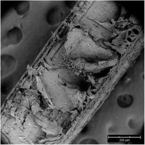 Fibril microstructure of untreated screw-pine fiber.