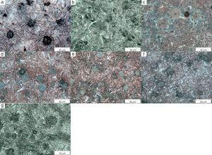 Microstructure photos of samples at various tempering temperatures: (a) austempered (276°C, without tempering), (b) austempered (276°C, with 316°C tempering), (c) austempered (276°C, with 371°C tempering), (d) austempered (276°C, with 427°C tempering), (e) austempered (276°C, with 482°C tempering), (f) austempered (276°C, with 538°C tempering), (g) austempered (276°C, with 593°C tempering) (500×).