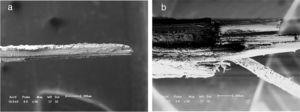 SEM fractographs with same magnification of tensile-ruptured bamboo fibers: (a) thinner, d=0.1255mm and (b) thicker, d=0.6946mm.