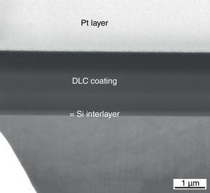 SEM-FIB image of the coated sample.