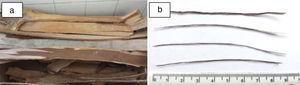 Eucalyptus: (a) bark pieces extracted from tree trunk&#59; (b) longitudinally cut fibers.