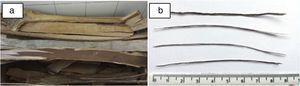 Eucalyptus tree bark (a) and eucalyptus fibers (b).
