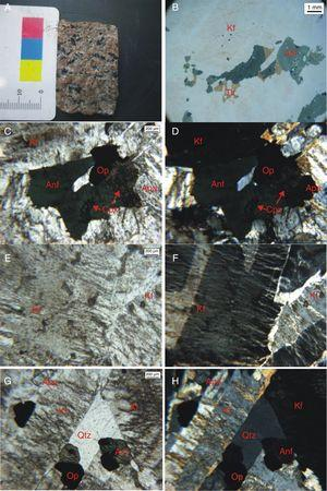 (a) Macroscopic aspect of the sample with preferred minerals orientation on the horizontal axis. (b) Photomicrograph in binocular magnifying glass showing titanite crystals. (c) Photomicrography in natural and (d) polarized light of amphibole grains containing inclusions of clinopyroxene in association with opaque minerals and apatite. (e) Photomicrography in natural and (f) polarized light showing a Carlsbad germination and perthitic intergrowths in K-feldspar. (g) Photomicrography in natural and (h) polarized light of a quartz grain among a K-feldspar.