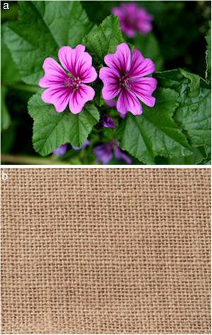 The mallow plant (a) and fabric (b).