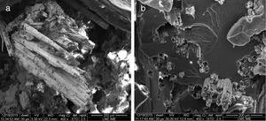 (a) Epoxy composite reinforced with 30vol% untreated mallow fibers&#59; (b) epoxy composite reinforced with 30vol% mallow fibers mercerized (5% NaOH, 24h and without agitation – CP4).