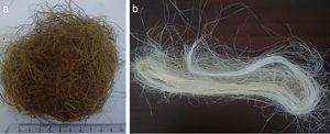 Natural lignocellulosic fibers as received: (a) coir fiber&#59; (b) PALF.