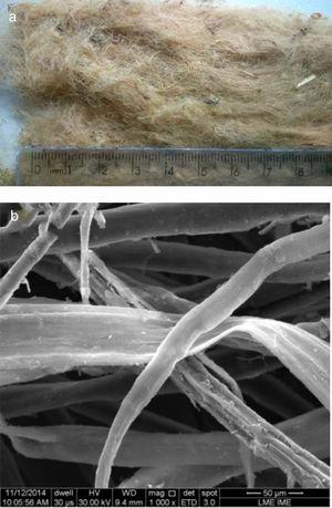 Raw ramie fibers: (a) general macroscopic aspect&#59; (b) microscopic detail of the fibers.