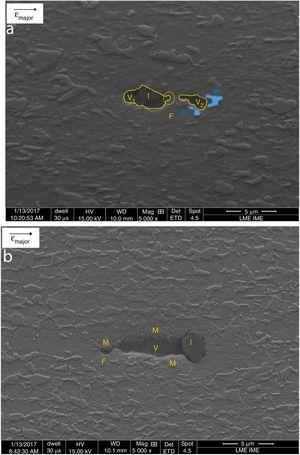 Scanning electron microscopy images from the DP600 uniaxial specimens deformed at two levels of total strain: (a) 10% (5000×) and (b) 19.5% (5000×). These micrographs were taken at regions cut parallel to the sheet rolling direction, i.e., along the major strain axis. The letters F, M, V and I designate ferrite, martensite, void and inclusion, respectively.