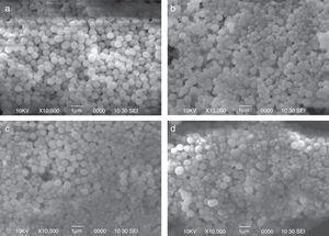 SEM images of AFS-NPs from four combinations (a) TMOS+APTMS, (b) TEOS+APTES, (c) TMOS+APTES, (d) TEOS+APTMS.