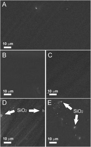 SEM images showing the differently coated AA2024-T3 surfaces: (A) Hy&#59; (B) Hy/AgNPs1&#59; (C) Hy/AgNPs2&#59; (D) Hy/AgNPs3&#59; (E) Hy/SiO2NPs.