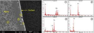 Composition analysis results for the surface oxides after exposure for 50h at 1123K.