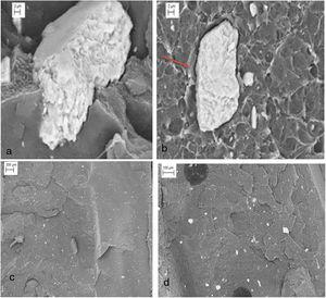 SEM micrographs of the HDPE/MSW fracture surface: (a,c) MSH5; (b,d) MSL5.