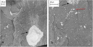 SEM micrographs of the HDPE/MSW fracture surface: (a) MSH8; (b) MSL8.