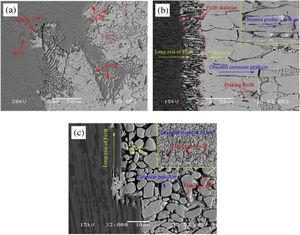 Corrosion morphology of Fe-3.5B alloy in liquid zinc for 48h at bath temperature 460°C: (a) non-oriented sample [86]; (b) Vertical sample [39]; (c) Parallel sample [39].