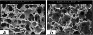 The micrograph of PHF3 to compare the changes (a) before and (b) after the immersion in Ringer's solution for 21 days.